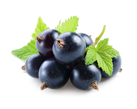 currant: Black currant with leaves