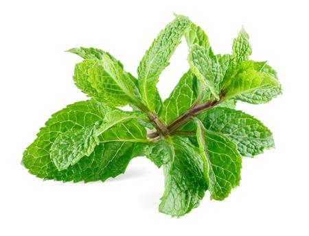 spearmint: Fresh mint in closeup