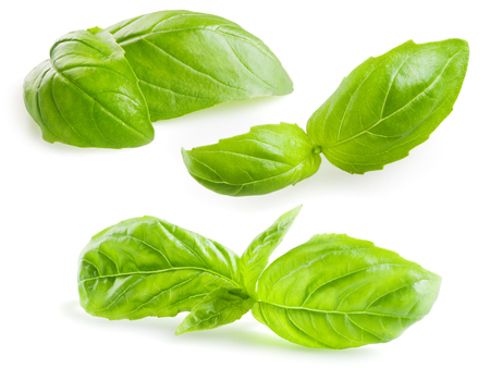 basil: Basil leaves isolated on white. Collection Stock Photo