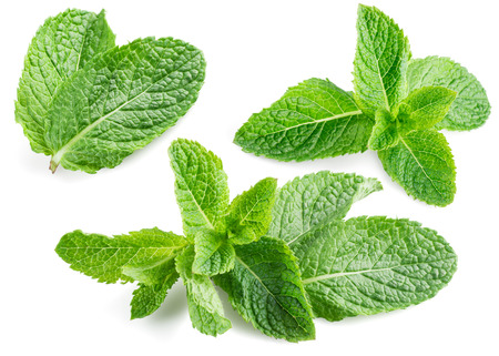 mint leaves: Fresh mint isolated on white. Collection