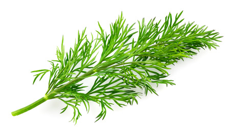Dill isolated on white background Stockfoto