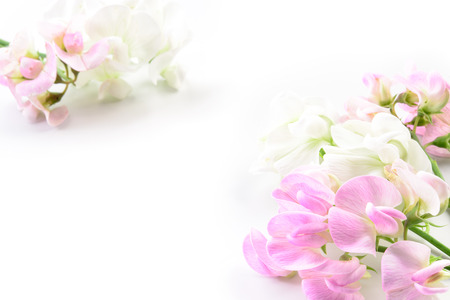 jardines con flores: Hermosas flores. Tarjeta con diseño floral