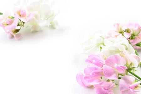 pink: Schöne Blumen. Karte mit Blumenmuster