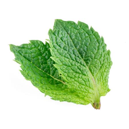 menta: Dos hojas de menta aislados sobre fondo blanco Foto de archivo