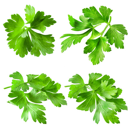 Parsley isolated on white background. Collection Banque d'images