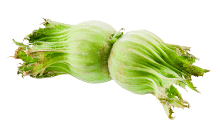unbroken: Green hazelnuts isolated on white Stock Photo