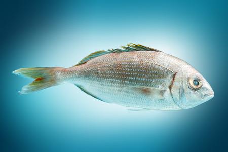fresh fish: Fresh dorado fish. Stock Photo