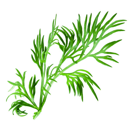 dill: Dill isolated on white background Stock Photo