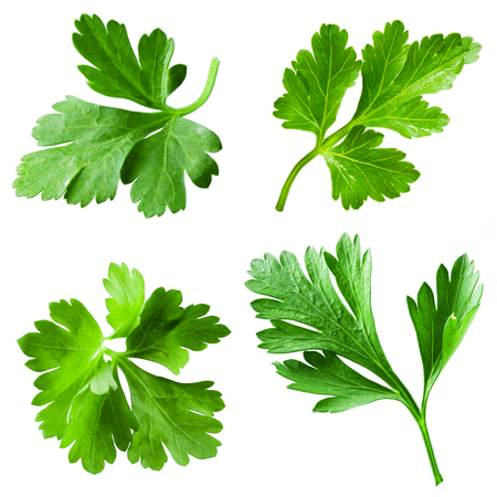 Parsley isolated on white background. Collection 写真素材