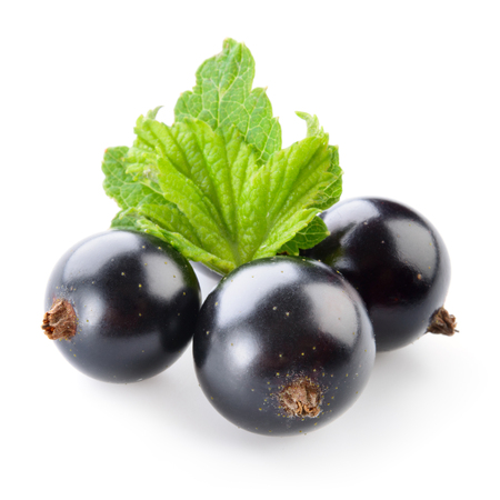 black currant: Black currant isolated on white.