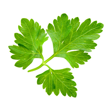 green herbs: Parsley isolated on white background. Stock Photo