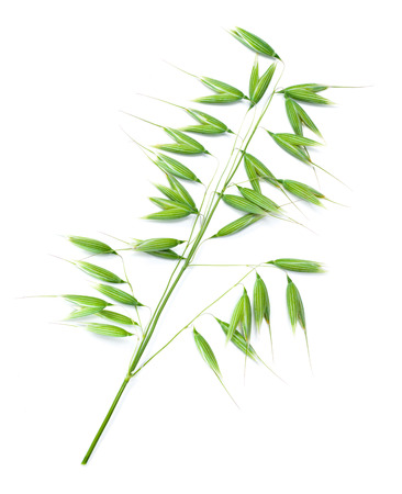 isolated on green: Green oat isolated on white background.