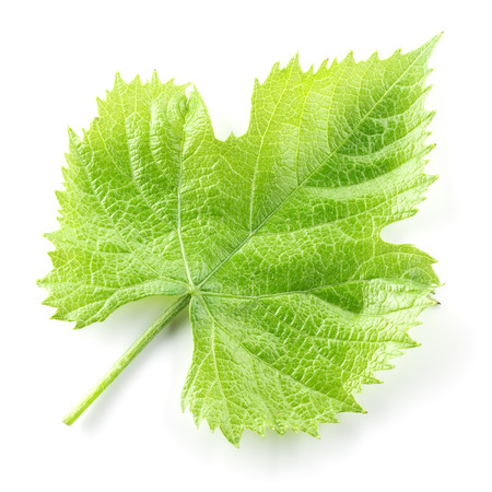 tendrils: Grape leaf isolated on white. Stock Photo