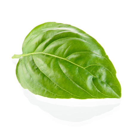 basil: Basil leaf isolated on white
