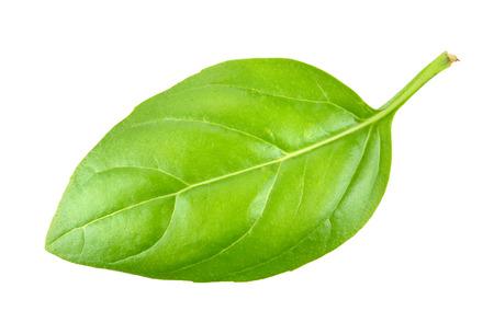 basil  leaf: Basil leaf closeup on white
