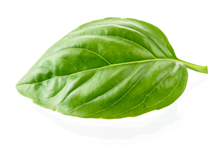 green vegetable: Basil leaf isolated on white background. Macro.