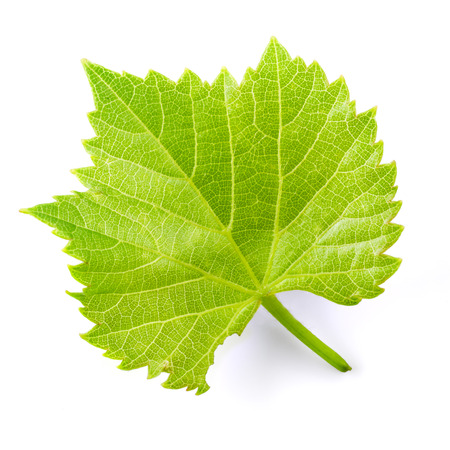 Grape leaf isolated on white. Banque d'images