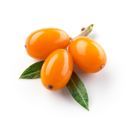 buckthorn: Sea buckthorn isolated on the white. With clipping path.