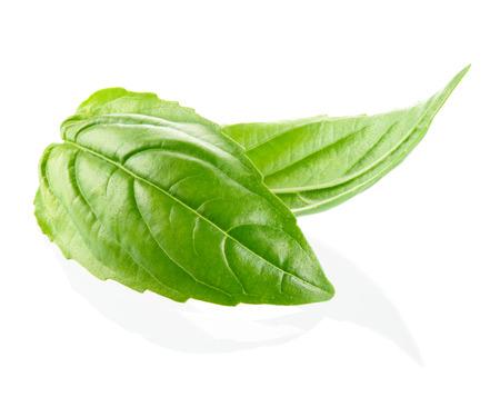 white isolated: Fresh organic basil leaves isolated on white background