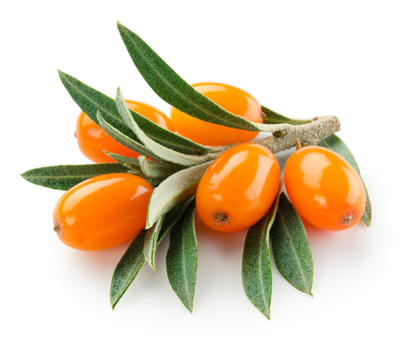 Sea buckthorn isolated on the white. With clipping path.