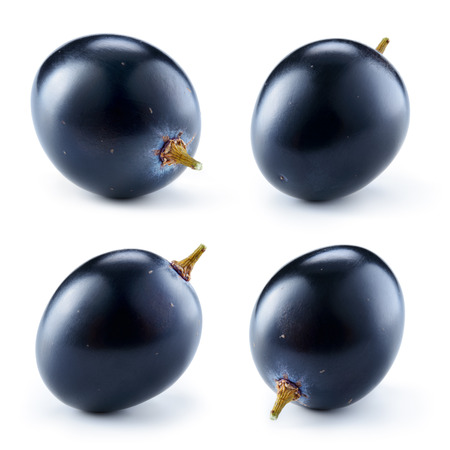Dark blue grape. Grape isolated on white background. One berry. Collection.