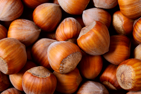Hazelnut. Fresh organic filbert. Nuts macro. Food background.