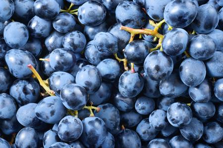 Dark grape. Blue grape. Wine grape. Stock Photo