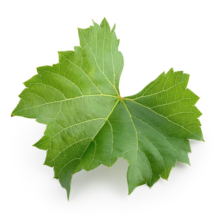 Grape leaf isolated on white. Full depth of field. Imagens