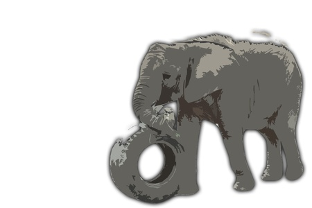 Elephant chewing some grarss with trunk and pushing tyre