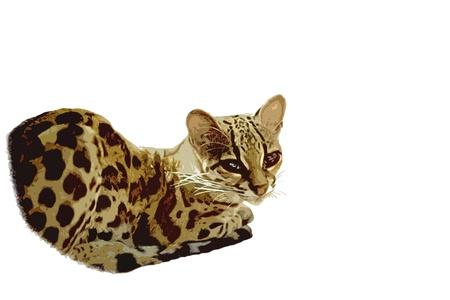 beautiful  yello lynx cutout style sitting with shiny eyes Stock Photo