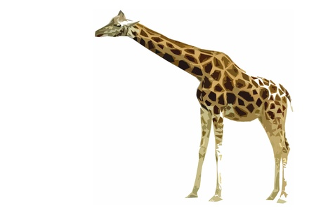 giraffe standing in artistic cutout style in front of a white background
