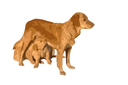 golden retriever and Puppy  in artistic cutout style in front of a white background