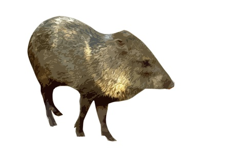 wild pig  in artistic cutout style in front of a white background