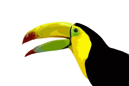 toucan behind a white background beautiful cutout art illustration