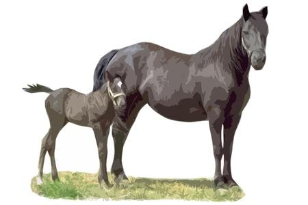 black horse with colt beautiful cutout art illustration Stock Photo