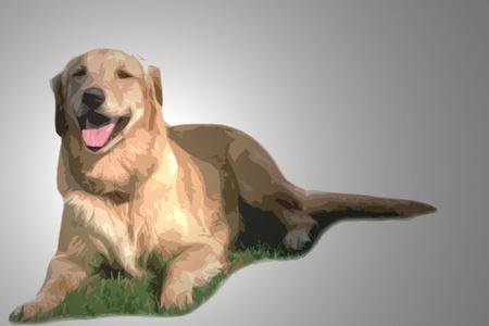 golden retriever lying on grass cutout art with lighting effects