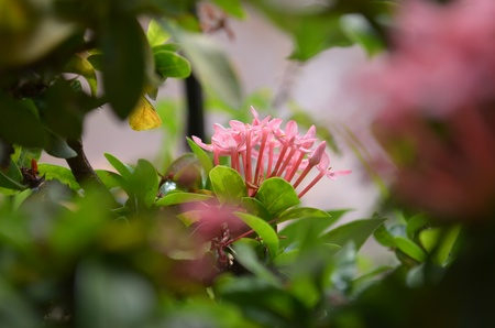 Pink flower surriunded by green leaves in a garden