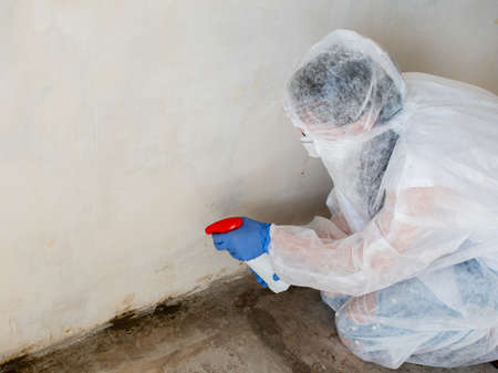 Treatment of mildew-affected walls with a sprayed chemical agent.