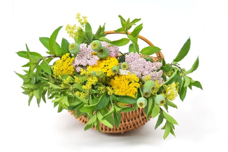 Basket with herbal tea plants photo