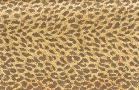 Tiger fur wallpaper photo