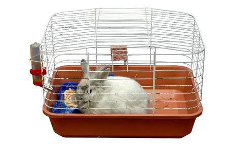 rabbit cage: coniglio in gabbia