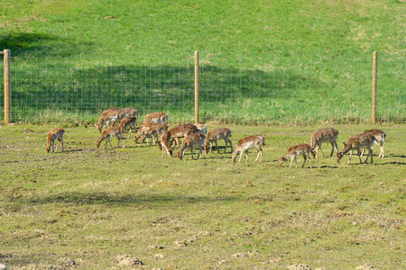 herd of deer: new deer herd Stock Photo