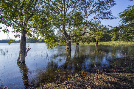 maleza: Mynneriya Reservoir, Parque Nacional de Sri Lanka Foto de archivo