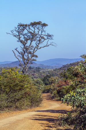 zimbabwe: Landscape in Kruger National Park, South Africa