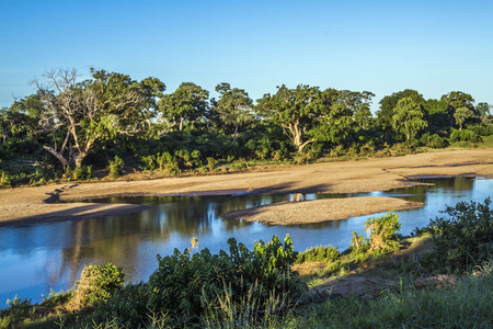 Shingwedzi river in Kruger National Park, South Africa Stock Photo