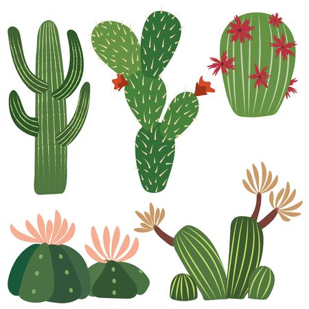 five vector cactus illustrations with details in one single file.