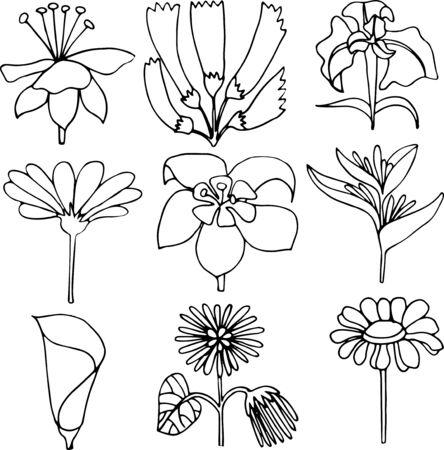 hand drawn vector flowers linear illustration design Ilustracja