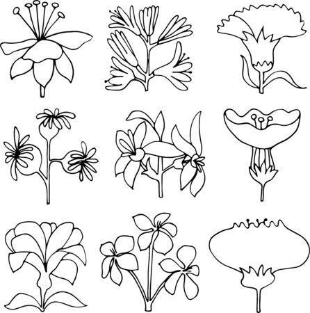 hand drawn vector flowers linear illustration design.