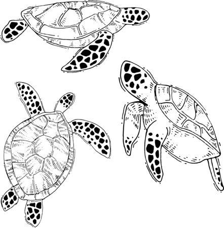 vector sea life drawings. Hand drawn sea turtle drawings.