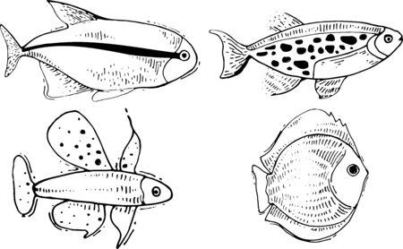vector fish drawings. Hand drawn sea life drawings.